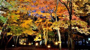 【2016/10/22~11/13】はこだてもみじフェスタ