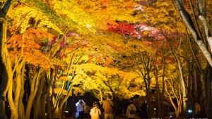 【2018/10/20~11/11】はこだてもみじフェスタ