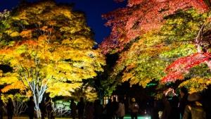 【2019/10/19~11/10】香雪園ライトアップ「はこだてもみじフェスタ」