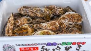 【2020/1/25・26】上磯郡漁協 牡蠣まつり