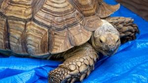 【フォトレポ】爬虫類好き歓喜「わくわくアニマルランド」2020/9/26・27