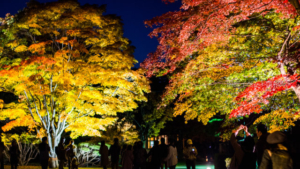 【2020/10/17~11/8】香雪園ライトアップ「はこだてMOMI-Gフェスタ」