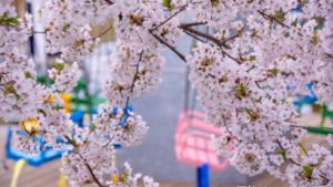 2021年4月函館イベントカレンダー